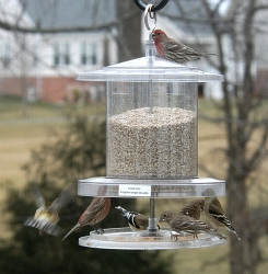 All Weather Clear Bird Feeder 6 Quart