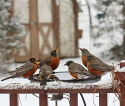 All Season Heated Bird Bath