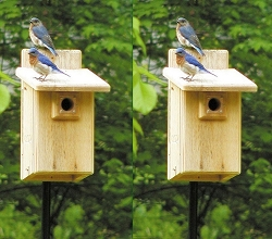 Ultimate Cedar Bluebird House Package w/Complete Pole Kit