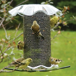 Forever Sunflower Feeder 3 Quart Clear