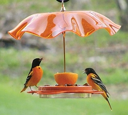 Oriolefest 12 oz. Oriole Feeder with Orange Weather Guard