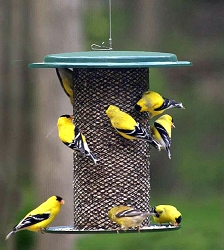 Birds Choice Safflower Feeder 3 Qt.