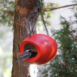 Mango Tree Fly-Through Bird Feeder Orange