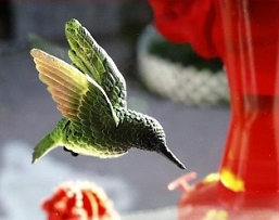 Ruby Throated Hummingbird Fly Through Window Magnet