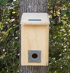 Conservation Small Winter Roost