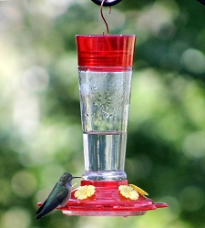 Ruby Hummingbird Feeder 10 oz.