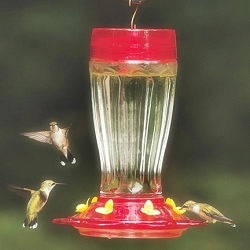 Big Gulp 40 oz. Glass Hummingbird Feeder