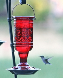 Red Jewel 20 oz. Hummingbird Feeder