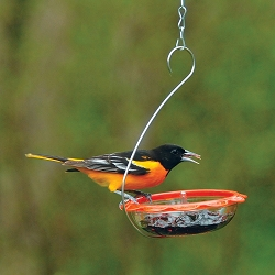 Droll Yankees BO's Marmalade Hanging Oriole Feeder Set of 2