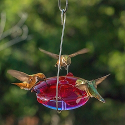 Droll Yankees Ruby Sipper Hummingbird Feeder Lavender