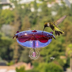 Droll Yankees Ruby Sipper Window Hummingbird Feeder Lavender