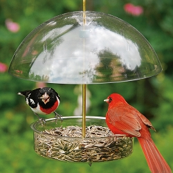 Seed Saver Domed Bird Feeder