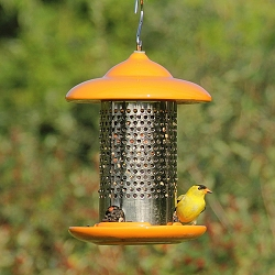 Bird Stop Ceramic Feeder Orange