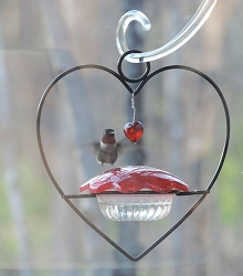 Hummingbird Heart Feeder Set of 2