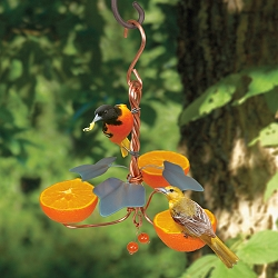 Copper Oriole Triple Fruit Feeder with Ivy