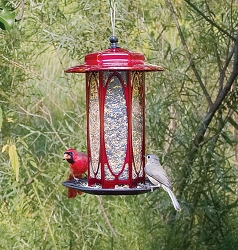 Classic Long Stem Rose Lantern Bird Feeder