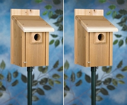 Deluxe Bluebird House Package w/Pole Kit