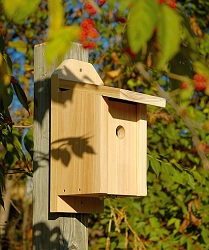 Chickadee Joy Box