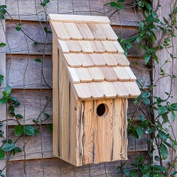 Bluebird Bunkhouse Birdhouse Natural