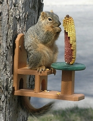 Recycled Poly Squirrel Table & Chair Feeder