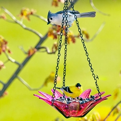 Daisy Hanging Glass Bird Feeder Fuchsia 8
