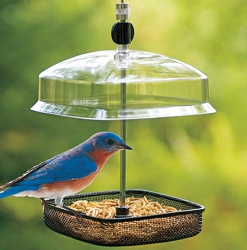 Adjustable Mesh Dome Mealworm Feeder