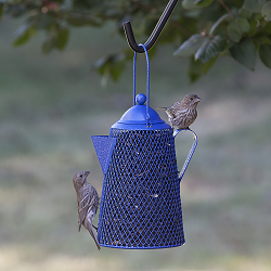 NO/NO Coffee Pot Wire Mesh Bird Feeder