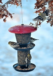 NO/NO Red & Black Multi-Tiered Mixed Seed Feeder