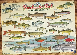 Freshwater Fish of North America 1000 Piece Jigsaw Puzzle