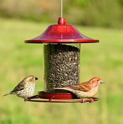 Red Sparkle Panorama Bird Feeder