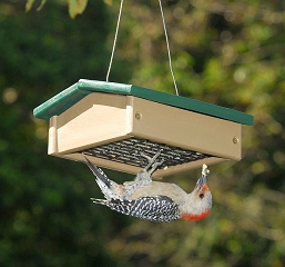 Recycled Plastic Upside Down Suet Feeder Hunter Driftwood