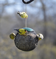 Sunflower Seed Sphere Feeder Green Set of 2