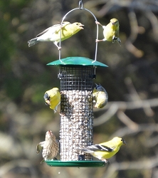 Petite Green Sunflower Feeder 2/PAK