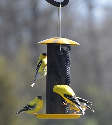 Petite Yellow Thistle Feeder 2/PAK