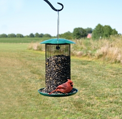 Mammoth Green Sunflower Feeder