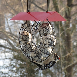 Round Wire Circle Suet Ball Feeder