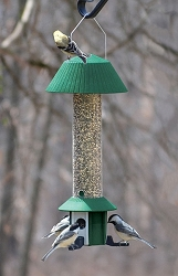 Squirrel Defeater Nyjer Bird Feeder