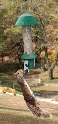 Squirrel Defeater Nut Bird Feeder