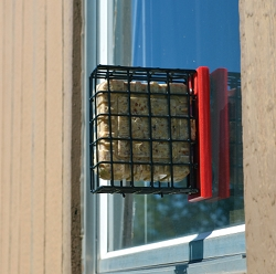 Recycled Plastic Window Suet Feeder Red
