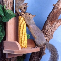 Squirrel Corn Platform Feeder