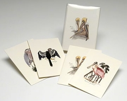 Coastal Bird Boxed Notecard Assortment Set of 8