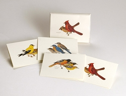 Peterson Birds Boxed Notecard Assortment Set of 8