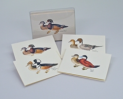 Duck Boxed Notecard Assortment Set of 8