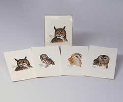 Peterson Owl Boxed Notecard Assortment Set of 8