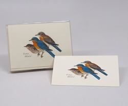 Eastern Bluebird Boxed Notecard Assortment Set of 8