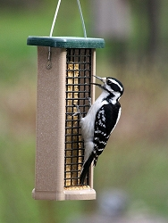 Birds Choice Recycled Plastic Double Suet Feeder