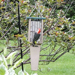 Birds Choice Recycled Plastic Double Cake Pileated Suet Feeder