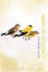 Goldfinch EcoNotes Set of 12