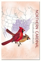 Cardinal EcoNotes Set of 12