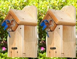 Cedar Eastern Bluebird House Package w/Complete Pole Kit